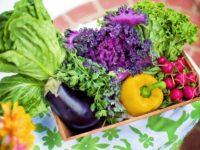 Ziel Ernährungsversorgung: direkt vom Anbau auf den Teller